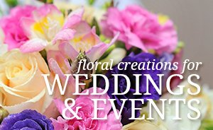 Wedding and Events Portfolio